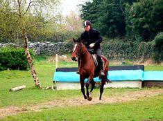 Twix and James jumping cross country. Horses For Sale, Cross Country, Irish, Ireland, Animals, Cross Country Running, Irish People, Animaux, Animal