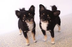 Long haired Chihuahua....if I didn't know they were made with felt I would have thought they were real...honestly!!!