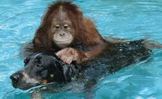 különböző állatbarátságok - Yahoo Image Search Results