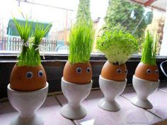 Eggshell bean sprout planters