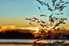 #3870 Sunrise, Coast, Celestial, Outdoor, Outdoors, Sunrises, Sunrise Photography, The Great Outdoors, Rising Sun