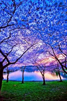 Blue trees - Best places to travel in Japan