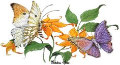 animated butterfly gifs - Google Search