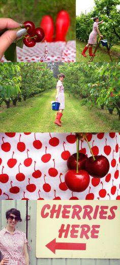 Red Hill Cherry Farm on my #BrilliantRoadTrip    My Poppet