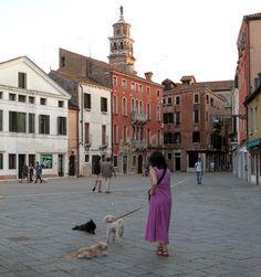 20 Venice Dogs Ideas Venice Dogs Italy