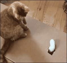 defeat the paw