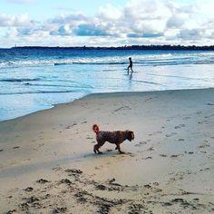 Dog Beach #pointlondsdale #queenscliff #bellarinepeninsula #visitgeelong #victoria #vic #australia by mrvideomelbourne http://ift.tt/1JO3Y6G