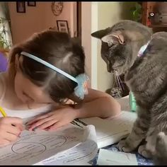 For All Cat Lovers, Everywhere! Funny Cute Cats, Cute Baby Cats, Cute Cat Gif, Cute Cats And Kittens, Cute Funny Animals, Cute Baby Animals, I Love Cats, Kittens Cutest, Cute Cat Video