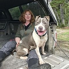 Pictures of Bachelor a American Pit Bull Terrier for adoption in Portland OR who needs a loving home.