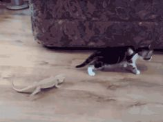 The 10 Goddamn Funniest Cat GIFs Of The Week
