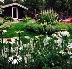 . Landscape Design, Garden Design, Scandinavian Garden, Gardening Tips, Hacks, Plants, Landscape Designs, Glitch, Backyard Landscape Design