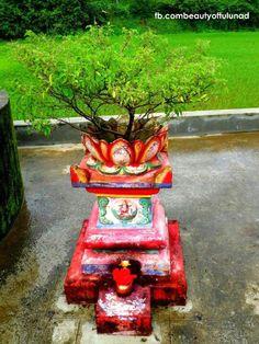Tulasi Plant, Tulsi Vivah, Mandir Design, Silver Pooja Items, Diamond Wallpaper, Weird Plants, Kolam Rangoli, Kerala House Design, Puja Room