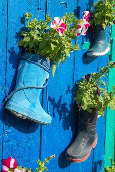Ein Trio von Gummistiefel fixiert auf eine blau lackierte hölzerne Tür dienen als Blume Pflanzer. Der Reichtum der Farben in diesem Bereich allein wäre ein angenehmes fest für die Augen.