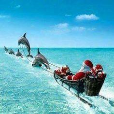 Merry Christmas Santa & Dolphins <3