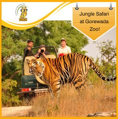 Wildlife Tour Packages in India - Book your Wildlife Tours in India.Just to bring you a real wildlife experience, we are here offering wildlife vacation, safari holiday tour packages. Wildlife Safari, Jungle Safari, Jungle Theme, Rishikesh, Maldives, Sri Lanka, Taj Mahal, Jim Corbett National Park, Jungle Resort