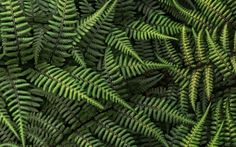 Earth - Fern Wallpapers and Backgrounds