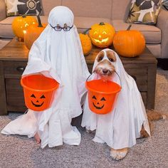 foster child Buddy and his best friend Reagan the adorable labradoodle are releasing a charitable book to support a foster parent organization! Animals And Pets, Funny Animals, Cute Animals, Labradoodles, Goldendoodle, Pet Dogs, Dog Cat, Doggies, Halloween