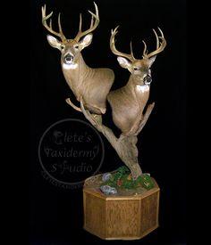 Deer mount on #pedestal; #taxidermy; deer #hunting