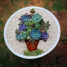 gorgeous and colorful succulents in a pot within a pot arrangement - fabulous! Colorful Succulents, Succulents In Containers, Cacti And Succulents, Planting Succulents, Succulent Gardening, Succulent Terrarium, Container Gardening, Dish Garden, Garden Pots