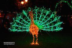 Luci d'Artista Salerno 2011 #photography #christmas #christmaslights #italy #salerno www.lucidinatale.net