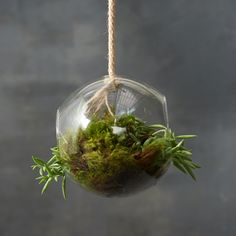 Open Side Sphere Terrarium