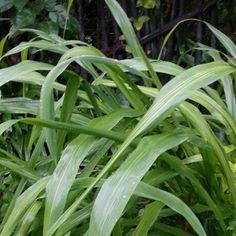 #green #kolonjono #Yogyakarta