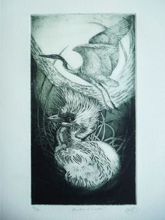 Heron Chick by Louise Scott (etching)