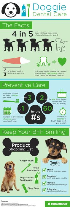 Once your dog turns 2, it's time for your furry friend's first professional dental cleaning. More teeth tips on our blog here.