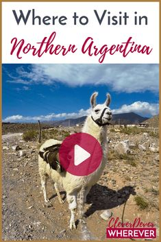 What's it like in Northern Argentina? Watch this video for where to visit around Salta! Cutest Animals On Earth, New Travel, Travel Plan, Local Festivals, Argentina Travel, Exotic Places, South America Travel, Dance Moves, Outdoor Travel