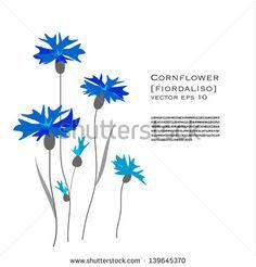Cornflower - Flower design Vector Illustration on white background - stock vector