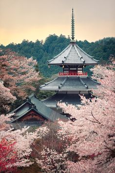 Cherry tree in full bloom Kinpusenji pagoda - Mount Yoshino, Nara, Japan