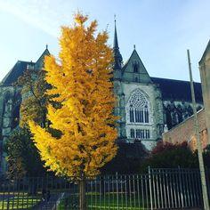 Beauté éphémère sublimée par la lumière du matin. Saint-Quentin se pare de ses couleurs d'automne . #gingkobiloba #arbre #tree #saintquentin #stquentin #stq #jaimesaintquentin #visitsaintquentin #jaimelaisne  #picardie #espritdepicardie #hautsdefrance #hautsdefrancetourisme