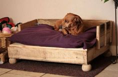 A raised dog bed made from an old pallet/skid.
