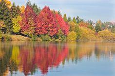 Fall at Green Lake, Seattle, WA.... soooooo excited for fall next year!!!!