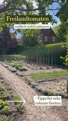 Indoor Vegetable Gardening, Container Gardening Vegetables, Planting Vegetables, Potager Garden, Tomato Plants, Horticulture, Stepping Stones, Outdoor Decor, Hedwig