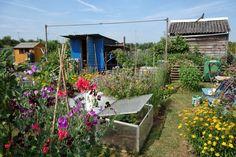 Urban Pollinators: A year on a wildlife-friendly allotment plot