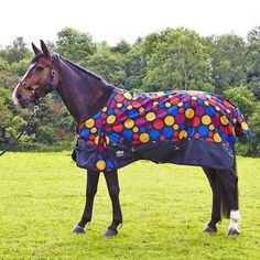 The new Elico Elicouture Quantock LiteTurnout Rug 100g fill Pre-order yours now due out late March The new quirky fun pattern Quantock Lite rug from Elico is