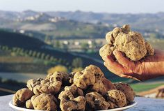 From Nat Geo: In Italy's Piedmont region, truffle hunters  hunt for the white Alba truffle.  Alba is also known for its wine, jam, & nocciola (creamy hazelnut chocolate). The Alba Int'l White Truffle Fair is staged every weekend from early Oct. to mid-Nov. The festival kicks off w/ the  traditional Donkey Palio. Visit the World Market to sample & buy pricey truffle-infused foods. In the evening, head to Villa La Favorita, a working farm-cum-inn, enjoy free samples of wines produced on-site.