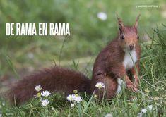Es Madrid no Madriz Magazine Ramen, Fauna, Natural, Madrid, Animals, Squirrels, Animais, Animales, Animaux