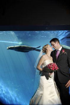 A unique wedding at Melbourne Zoo - What an amazing venue - www.homeaway.com.au/holiday-rentals/australia/melbourne-city/r36805