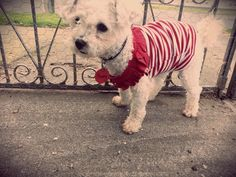 A wee doggy top I refashioned from baby clothing. Poppy looks so cute!