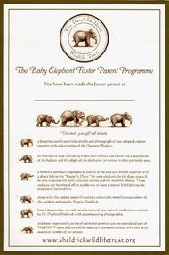 Adopt an Elephant Orphan - Foster an Elephant or Rhino Orphan ~ The David Sheldrick Wildlife Trust have more babies in there care than ever before & could really use your help.