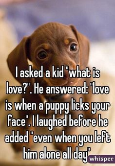 """""""I asked a kid """"what is love? He answered: """"love is when a puppy licks your face"""". I laughed before he added """"even when you left him alone all day""""."""" I think this is wonderful ❤️😍 Dog Quotes, Animal Quotes, Cute Quotes, Funny Quotes, Funny Memes, Love Qoutes, Funny Dogs, Love Is When, What Is Love"""