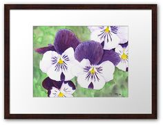 """White and purple Pansies flowers"" Framed Art Print by Savousepate on Redbubble #framedartprint #artprint #homedecor #watercolor #painting #watercolorpainting #flowers #pansies #pansy #spring #purple #white #green"