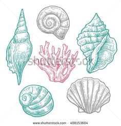 Sea shell and coral. Set Engraving vintage vector illustrations. Isolated on light background. Hand drawn sketch sea shell
