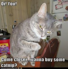 Oi! You!  Come closer...wanna buy some catnip?