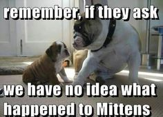 Wisdom passed on to the puppy