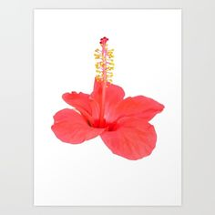 Hibiscus Art Print by Taiche. Worldwide shipping available at Society6.com. Just one of millions of high quality products available. #Hibiscus Art #Print by #Taiche | #Society6 https://society6.com/product/hibiscus395560_print#s6-6878768p4a1v45