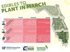 What to plant in March (Spring) in north, central, and south Florida