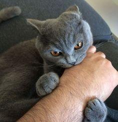 ''Yahu sen kedisin bu seri katil bakışları niye?'' Dedirten 19 Kedi